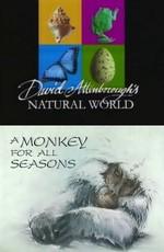 BBC: Наедине с природой: Обезьяна на все времена года