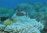 Сцена из фильма Защитники океана / Ocean Warriors (2016)