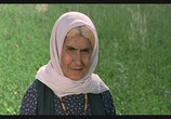Сцена из фильма Цвет Рая / Rang-e khoda (1999) Цвет Рая сцена 5