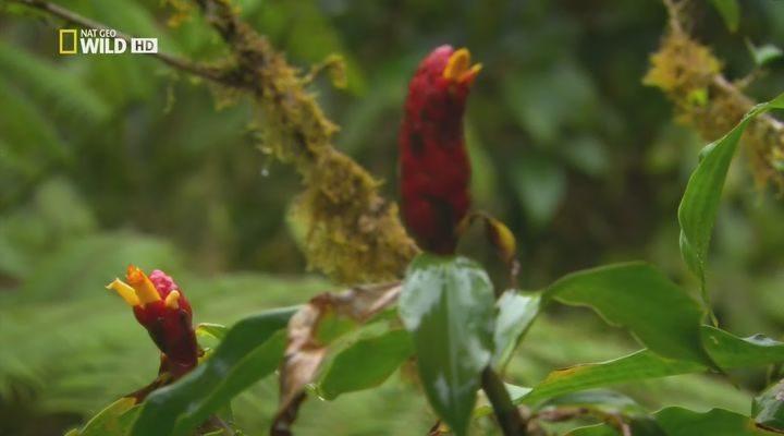 Картинки природа амазонки