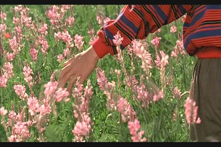 Фильм цвет рая