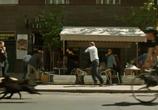 Сцена из фильма Белый Бог / Fehér Isten (2015)