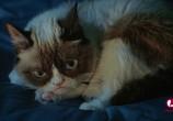 Сцена из фильма Худшее Рождество Сердитой кошки / Grumpy Cat's Worst Christmas Ever (2014) Худшее Рождество Сердитой кошки сцена 5