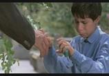 Сцена из фильма Цвет Рая / Rang-e khoda (1999) Цвет Рая сцена 4