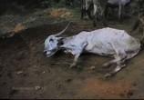 Сцена с фильма Земляне / Earthlings (2005)