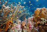 Сцена из фильма На глубине морской / Under the Sea (2009) На глубине морской сцена 3