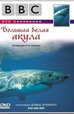 BBC: Большая белая акула