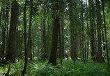 Сцена из фильма Лес призраков / The Forest (2016)