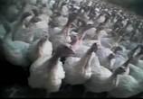 Кадр с фильма Земляне торрент 08313 любовник 0