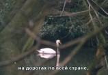 Кадр с фильма Нити торрент 05778 сцена 0