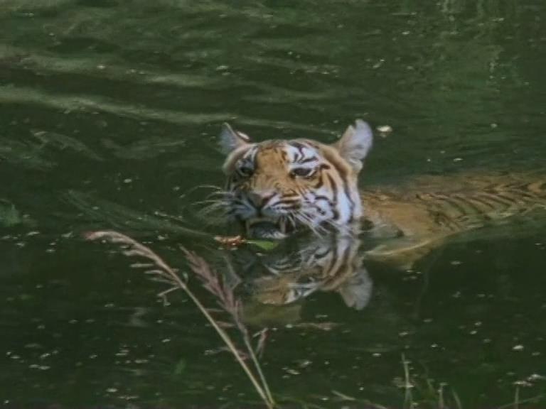 Фильмы про животных bbc скачать торрент » каталог файлов mu online.