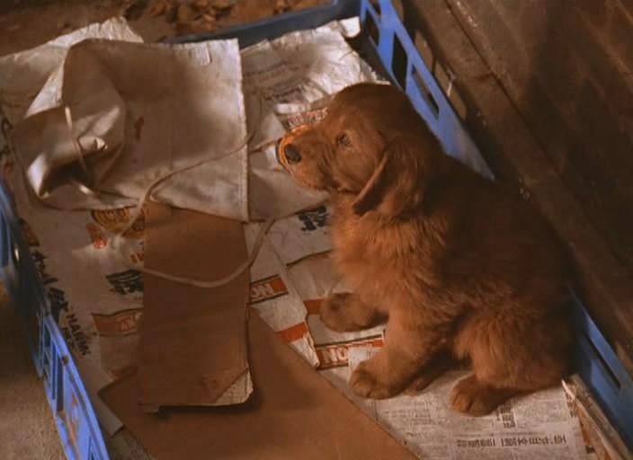 флюк фильм 1995 скачать торрент - фото 2