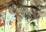 Сцена из фильма Странный Томас / Odd Thomas (2013)
