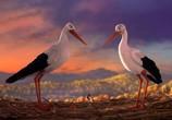 Сцена из фильма Трио в перьях / Richard the Stork (2017)