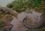 Сцена из фильма Австралия: Земля вне времени / Australia: Land Beyond Time (2002) Австралия: Земля вне времени сцена 1