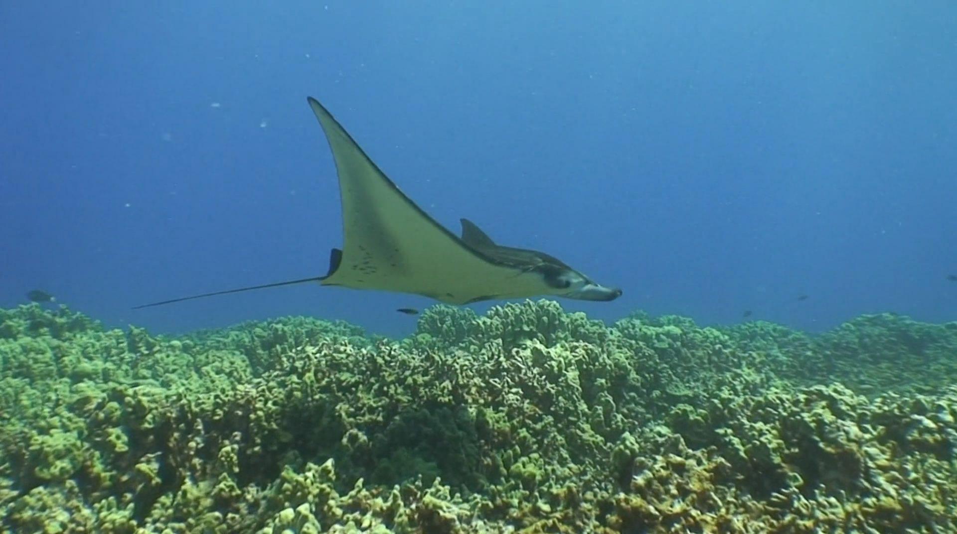 Живые пейзажи подводный мир гавайи