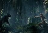 Сцена из фильма Тарзан. Легенда / The Legend of Tarzan (2016)