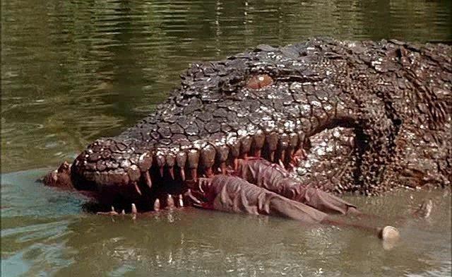 Крокодил данди фильм (1986) смотреть онлайн бесплатно в хорошем.