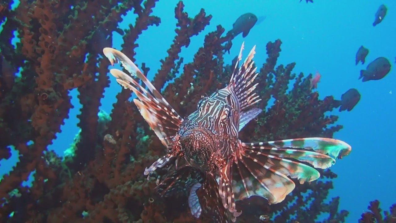 Ролики с алетта океан 12 фотография