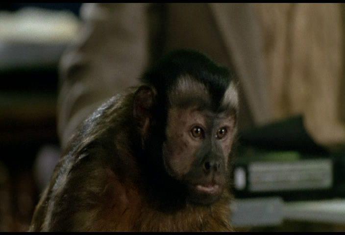 Голос обезьяна скачать бесплатно mp3