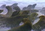 Сцена изо фильма Земляне / Earthlings (2005)
